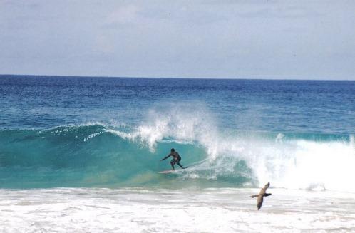 surfista_onda