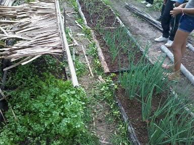 Uma das hortas cultivadas por famílias no povoado Coité.