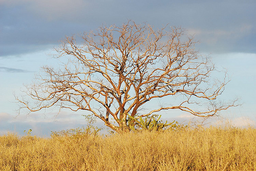Em 2010, a seca castigava a região do Papagaio em São Mamede (PB). Foto: John Medcraft.