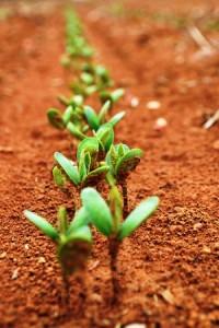 P10_18_05_15_Espalhando_sementes